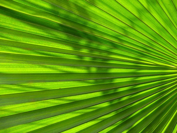 theinfill - sun and shadow on fan palm leaf