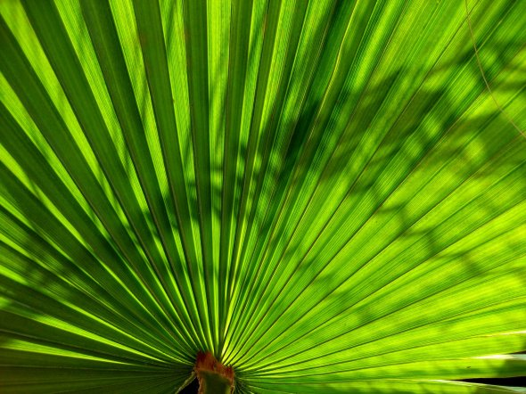 theinfill - fan palm jazzy stripes and hanging straw end