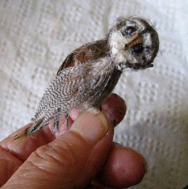 theinfill Medieval, Tudor, Jacobean 1:12 dolls house blog - the infill dolls house blog – non-specific owl 1:12 scale