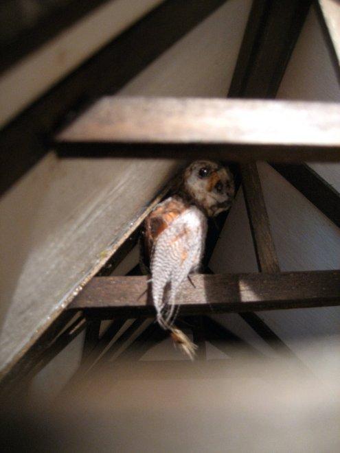 theinfill Medieval, Tudor, Jacobean 1:12 dolls house blog - the infill dolls house blog – owl in the schoolroom beams